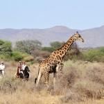 En selle pour la Namibie