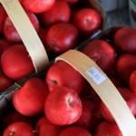 Ontario - pommes Mac Intosh
