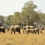 Zambie : plus belle sera la chute !