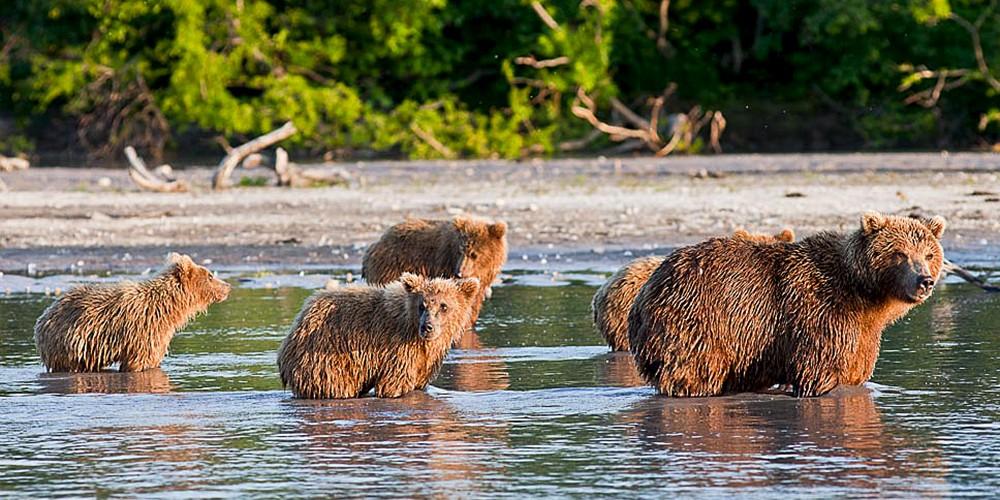 Chez les ours du Kamtchatka