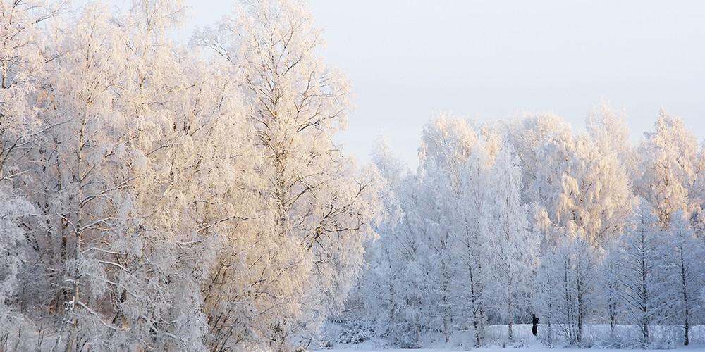Safari glacé au pays Suomi