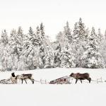 Laponie : du froid au chaud !