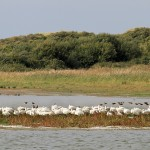 Addition de plaisirs en Baie de Somme