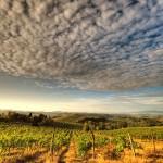 La Toscane et son vignoble