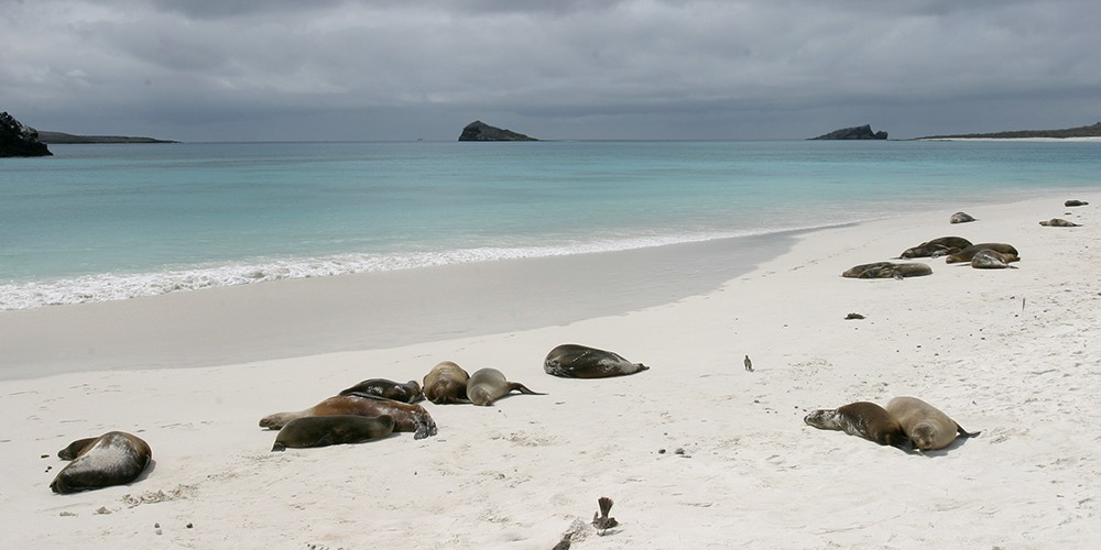 L'Equateur, la terre et les îles du Milieu !