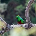 Le Costa Rica ou la vie en vert
