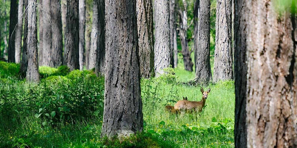 Le Tyrol, nature à 100 %