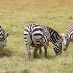Botswana, le pays des Tswanas