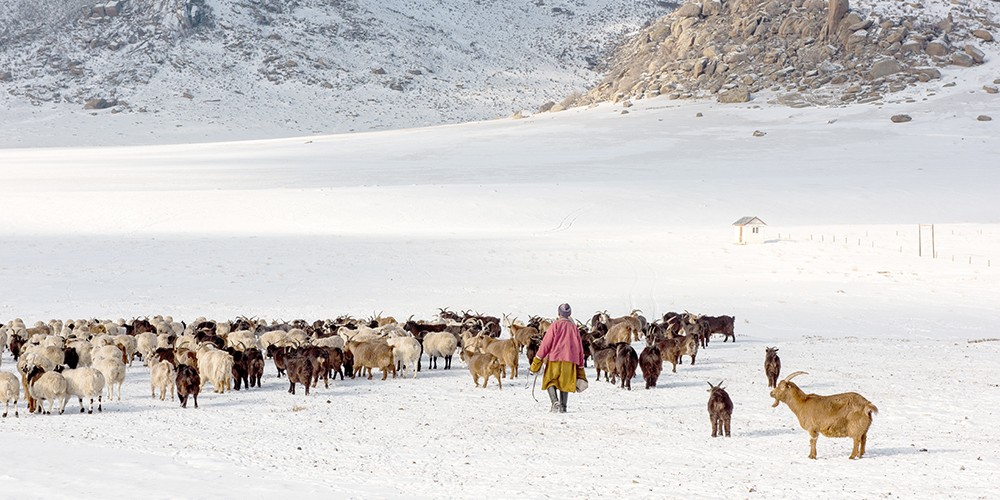 Une expédition mongole qui a du chien