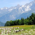 Balade alpine au cœur du Val Montjoie